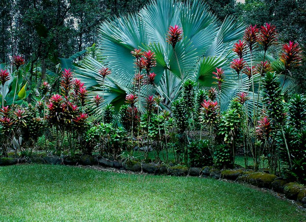 I want to share with you these 10 paradise gardens Hawaiian Tropical Gardens MG 1094