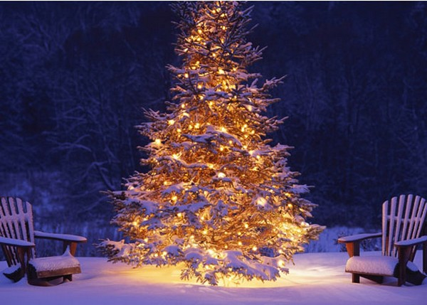 outdoor-christmas-tree  Inspiring outdoor christmas decorations that you will love! outdoor christmas tree